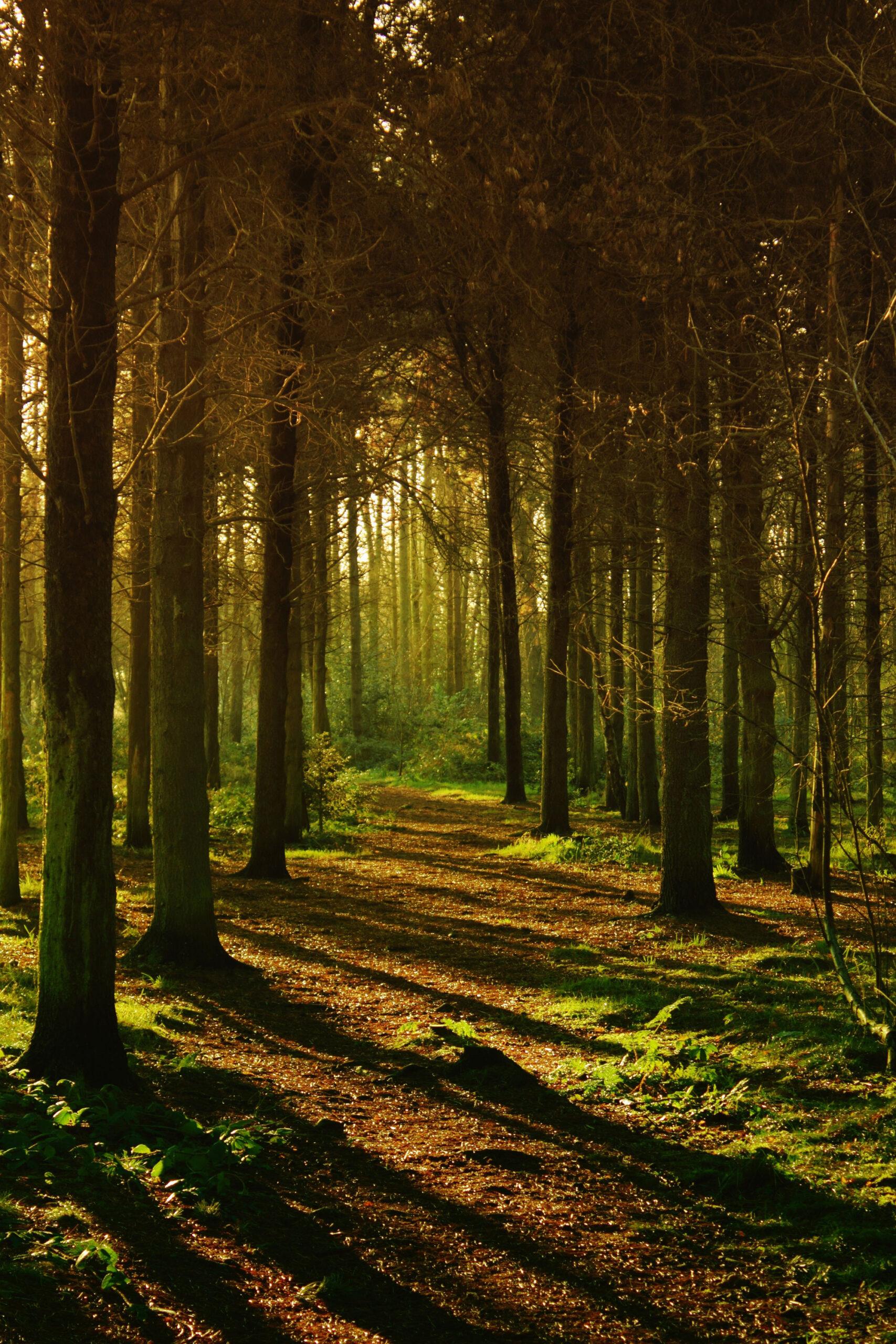 I det skovrige landskab er der rig mulighed for at få prøvet traveskoene