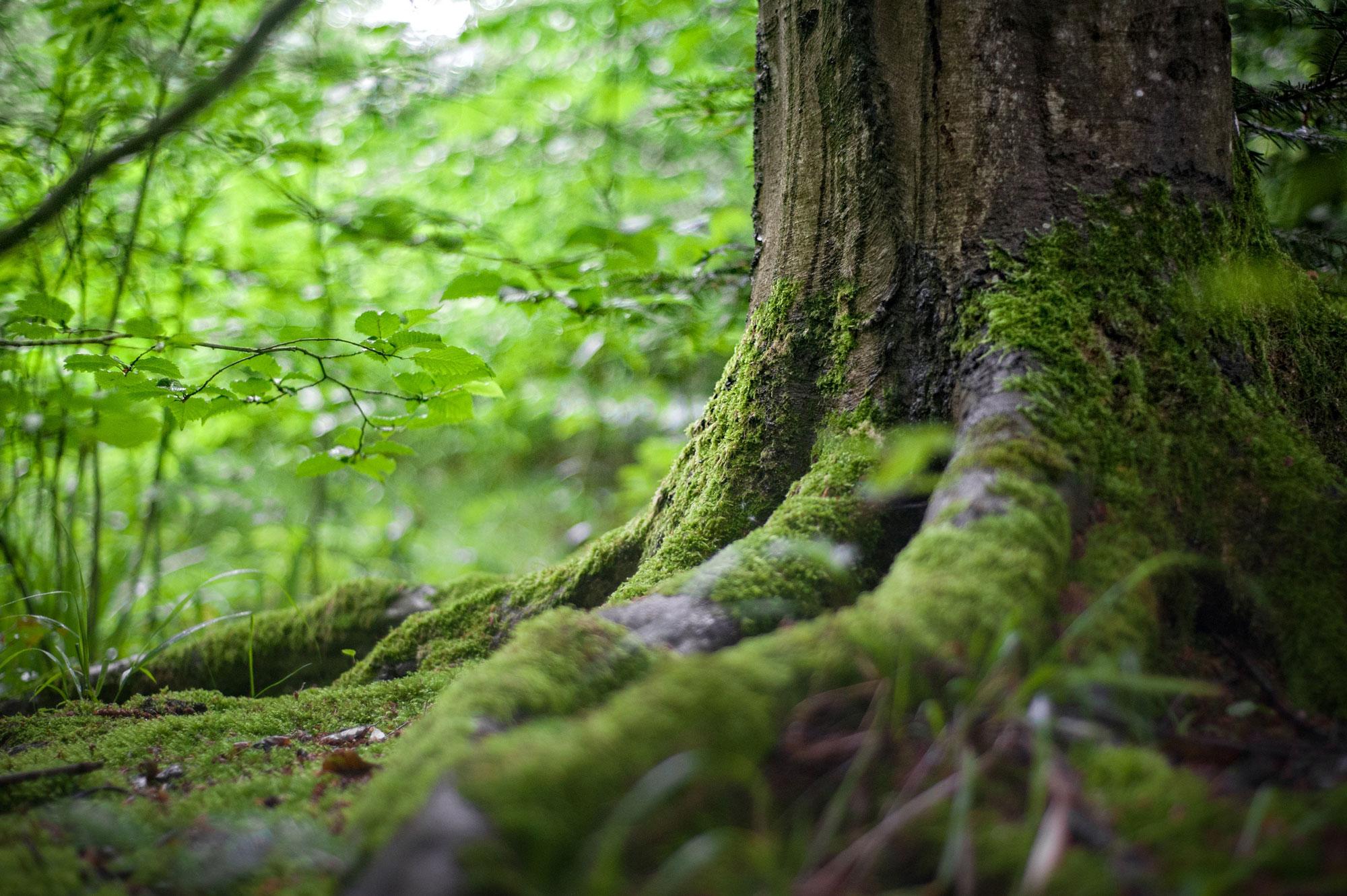 Rundt om det gamle Ringsted er en sti omkranset af gamle lindetræer. Stien kaldes kærlighedsstien